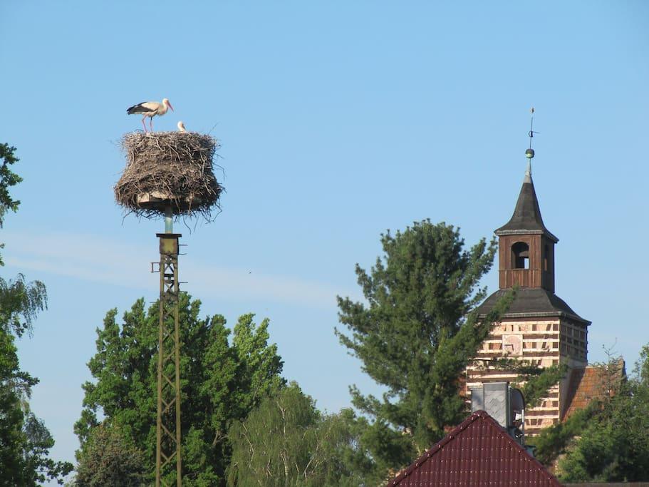 In the stork village