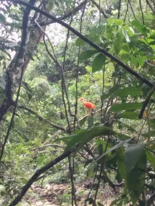A 200 mts de una reserva forestal