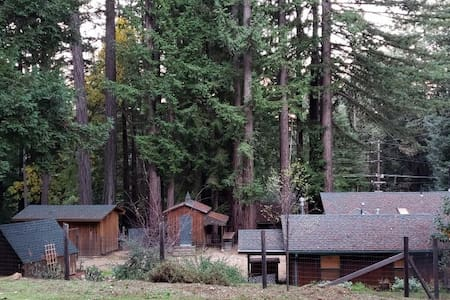 Majestic house in the redwood forest