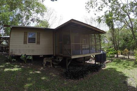 It's Simply Life in Belize - Bullet Tree Falls
