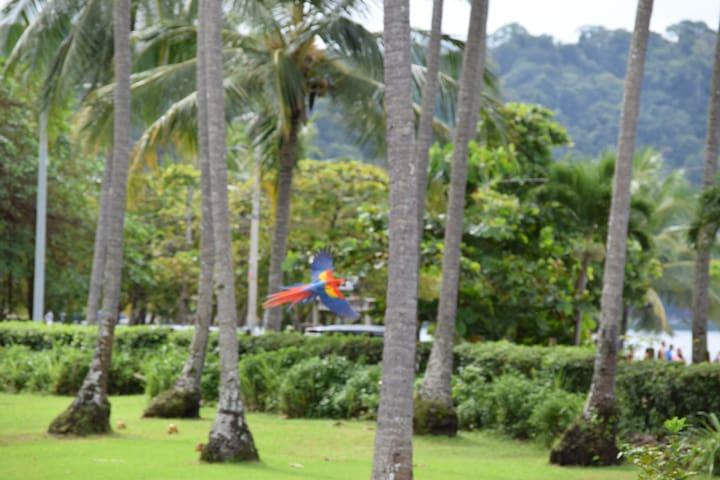 Nature's Paradise - Nativa Upper Villa - Pura Vida