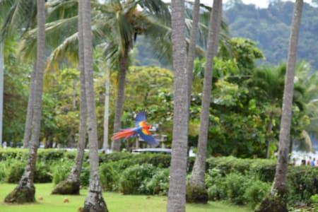 Nature's Paradise - Nativa Upper Villa - Pura Vida - Tarcoles