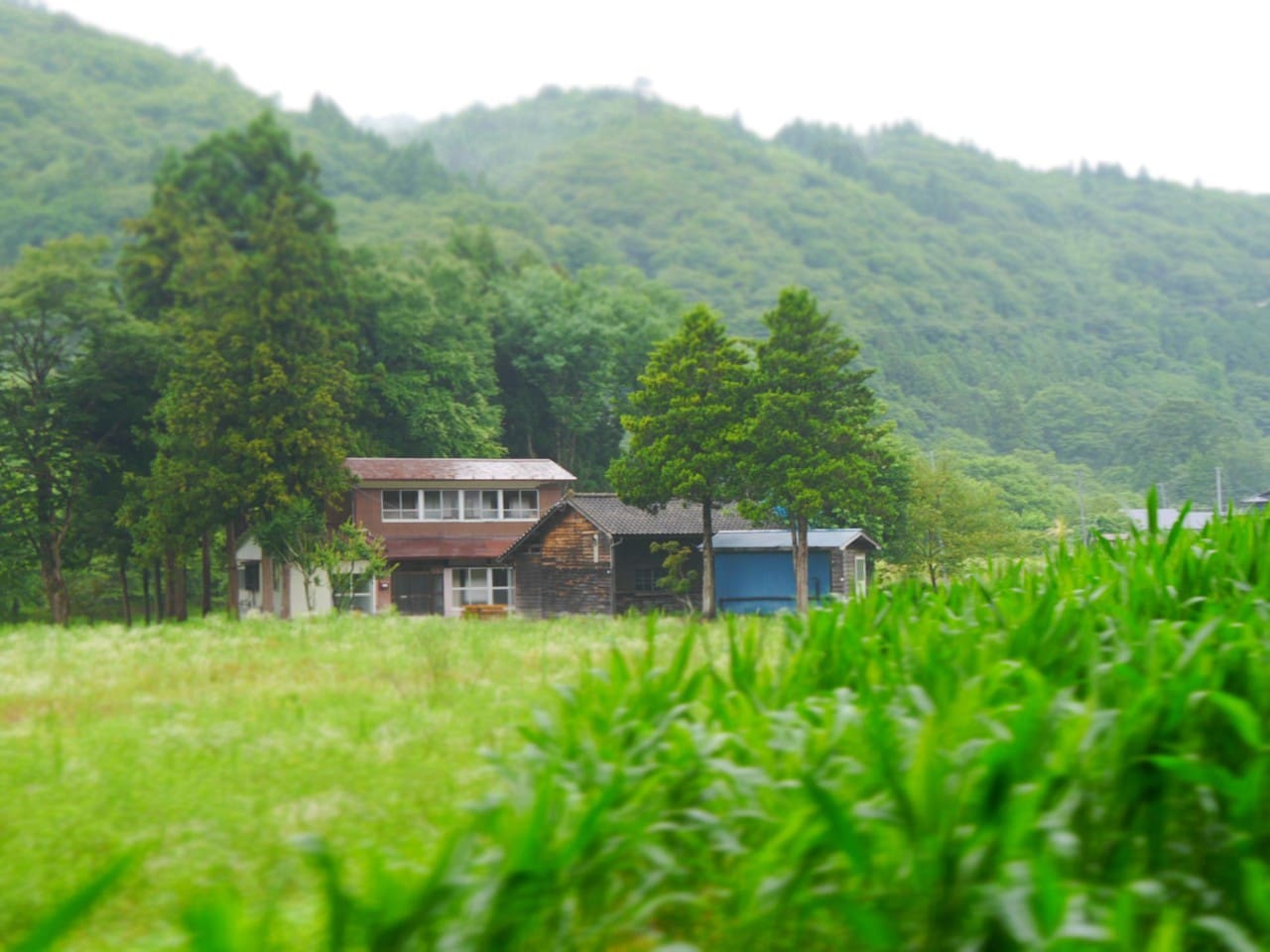 Japanese style old farm house surrounded by fields and small river  in a hilly area 畑、小川に囲まれた農家です。