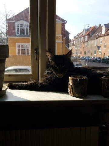Billie the cat