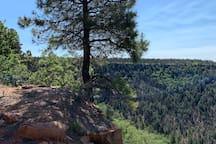 Elk Ridge Cabin/ Relax In The Pines