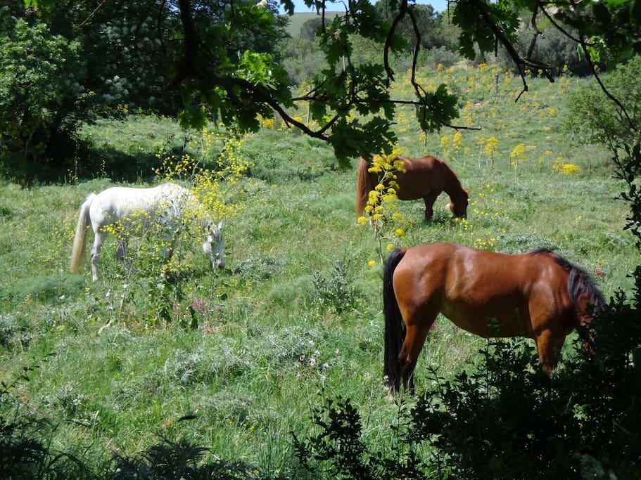 Si può fare attivtà con i cavalli