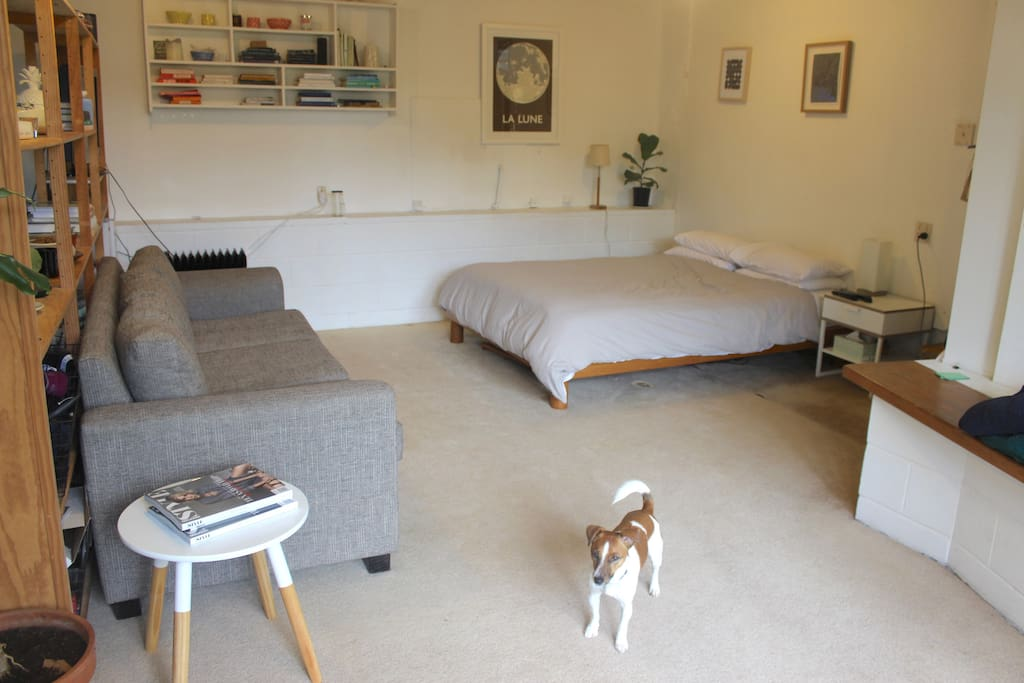 Bedroom/lounge area (and Max the dog)