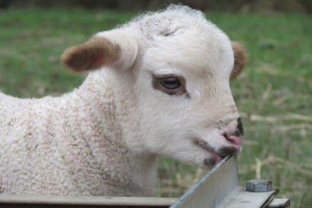 Bonnie Brae Farm Stay Molesworth Victoria - Molesworth