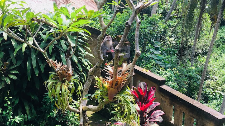 Cozy private ensuite next to Ubud Monkey Forest