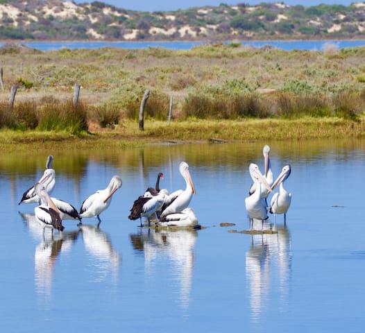 Birdlife in Boundary Creek
