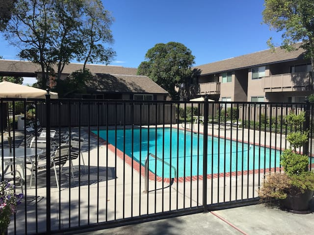 Spacious 1Bd-1Ba Apt: Prime location Mountain View - Mountain View - Pis