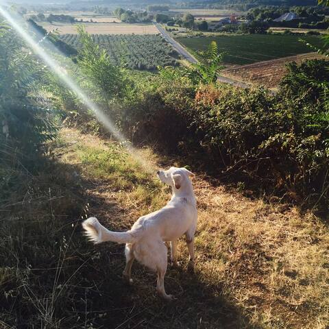 Camillo and the sun between cherry trees