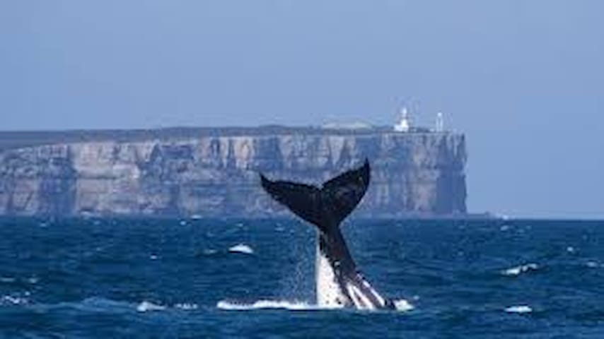 Whale watching Point Perpendicular Jervis Bay