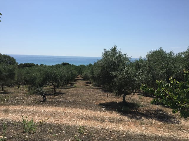 Vounaki Bio-Olive Grove overlooking the open sea