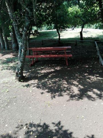 Agrocamping Kiñeco, sitio pewen Conguillio