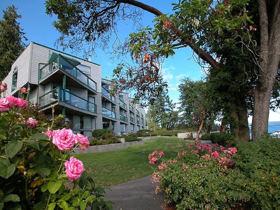 Our rose garden and condos