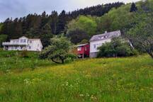 Sofia`s house to the right. An orchard is on the steeps slopes down towards the fjord. Hosts Hege and Øyvind live nextdoor in the house on the left.