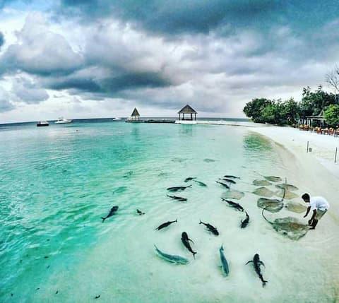 Chao GuestHouse Maafushi, R3