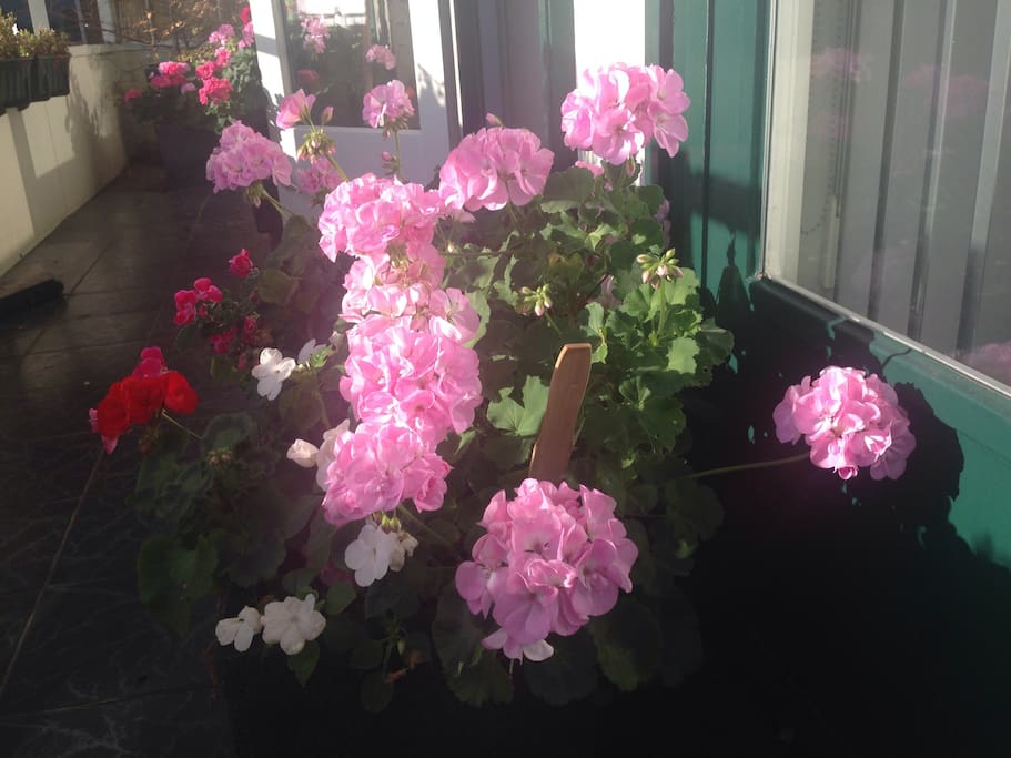 balcony with flowers for breakfast in sun
