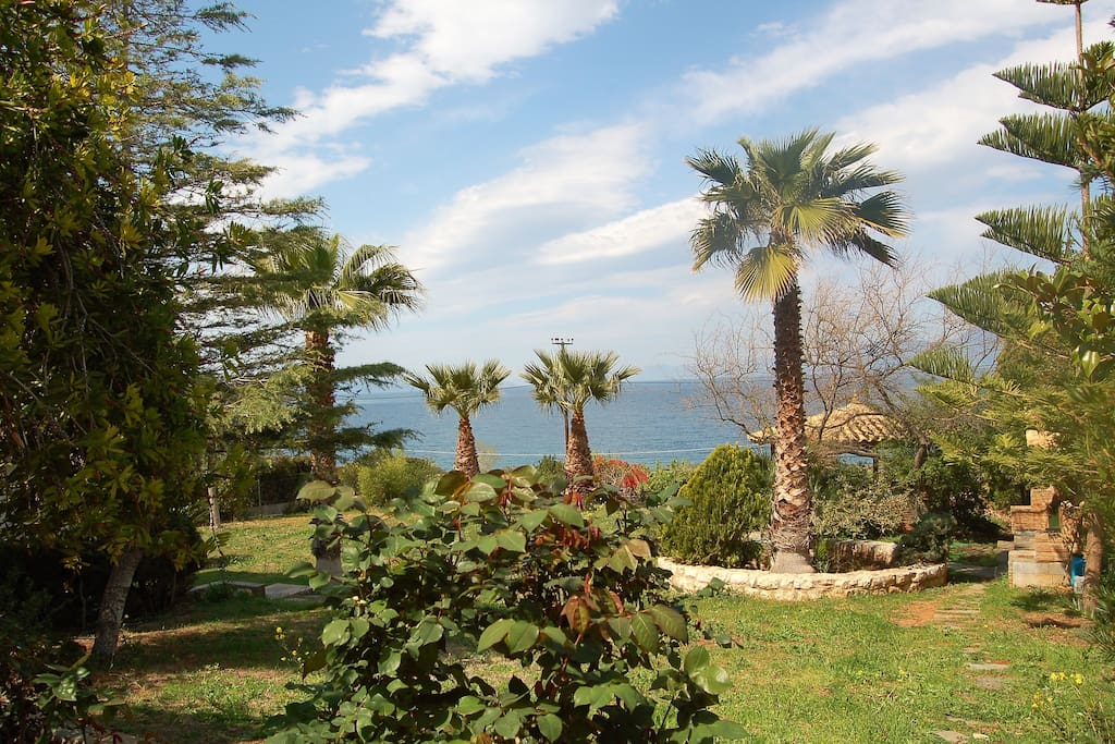 the palm trees and the kiosk in the garden