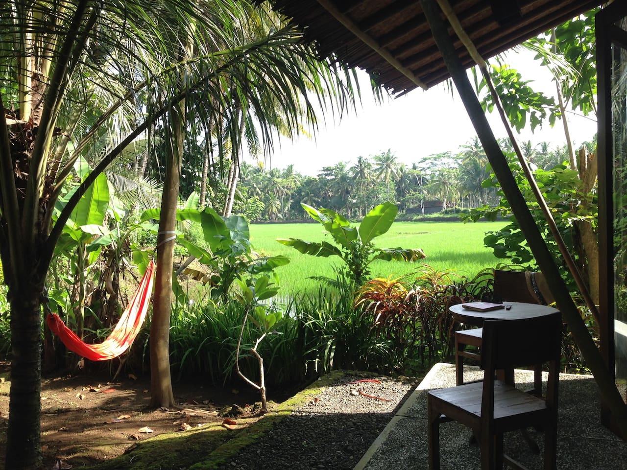 hammock by the ricefields