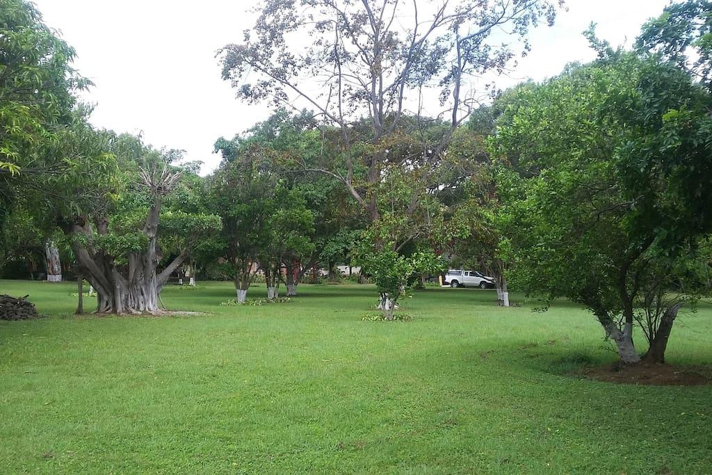 patio para caminar con arboles frutales
