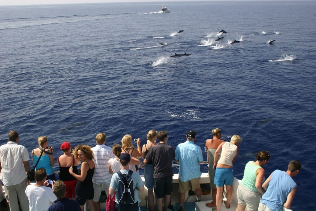 The Whales and Dolphins trips near the coast of Los Gigantes