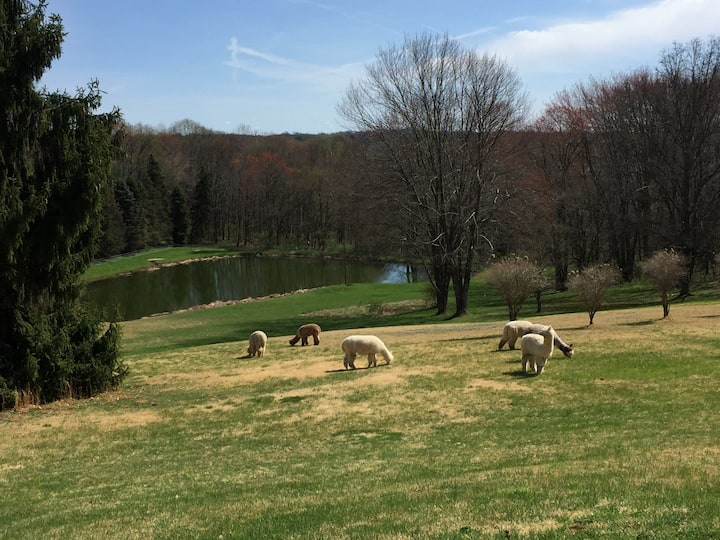 Alpacas and Nature retreat by Nature's Melodies