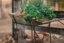 Some parsley and herbs for your enjoyment