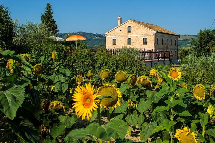 Piagge Del Sole: natura e relax - Montecarotto - Casa