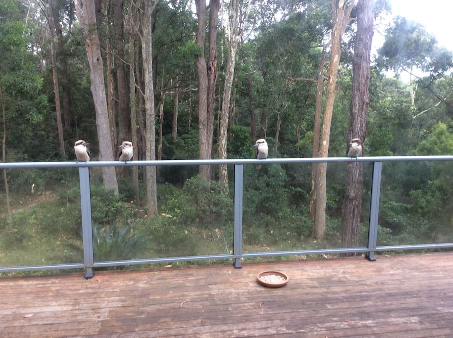 A family of kookaburras visit daily, as well as king parrots, lorikeets and black and white cockatoos.