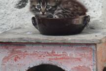 Cortile - Uno dei nostri gatti