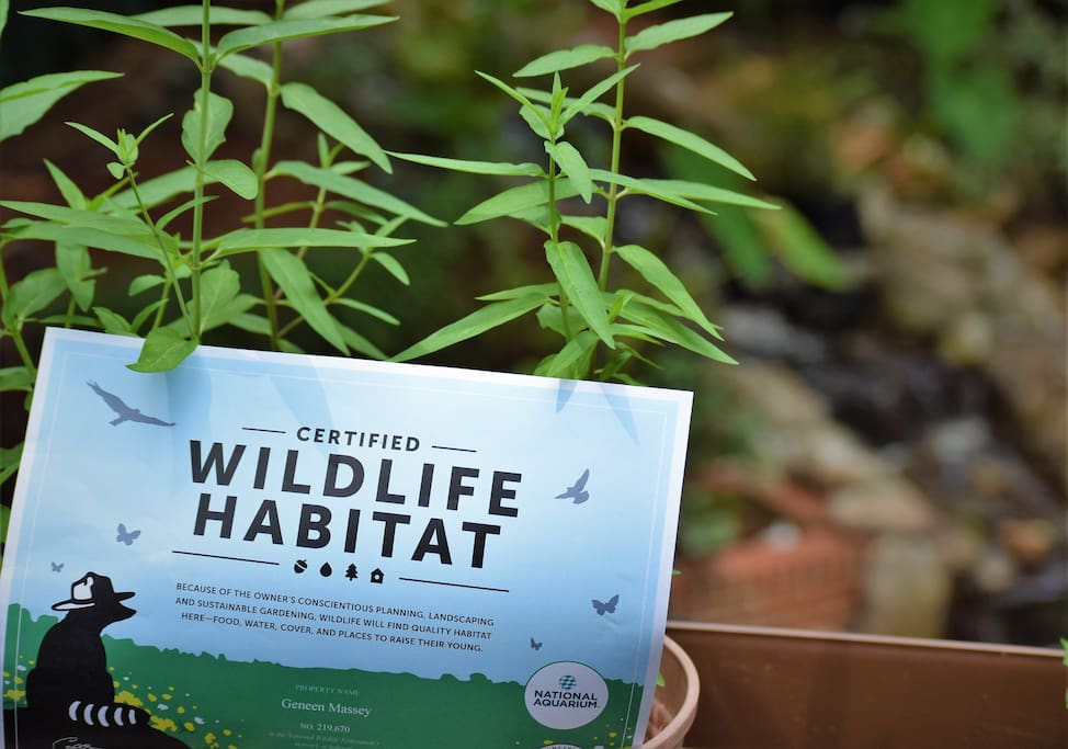 The National Wildlife Federation in association with the Baltimore Aquarium have certified our backyard as a wildlife habitat.
