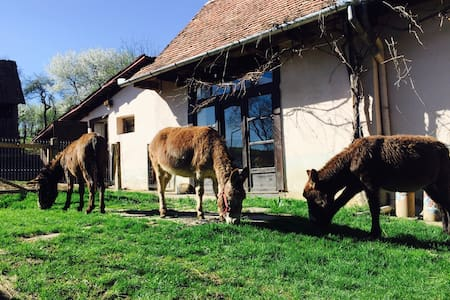 The Donkey Farm - in the heart of Transylvania