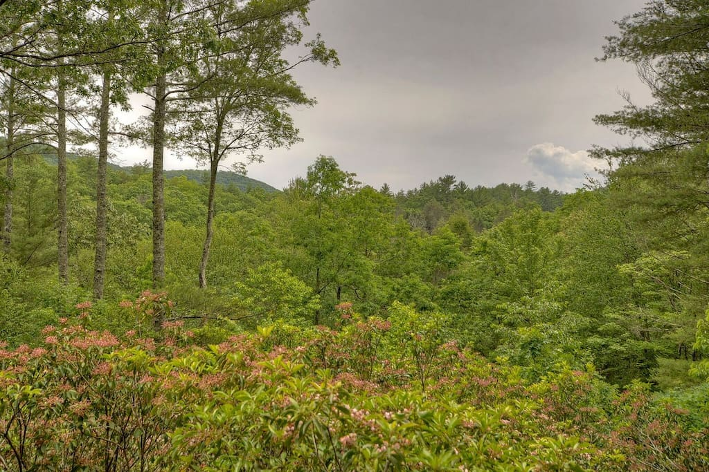 Seclusion View overlooking mountains and mountain laurel