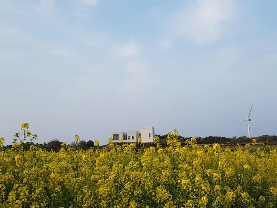 Jeju Palm House (제주팜하우스)