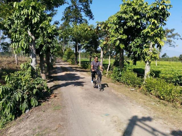 Biking Trails @ Sapoi