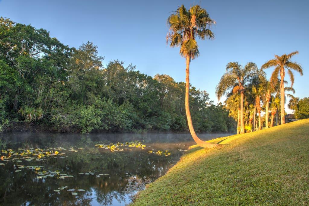 Beautiful Lily lined waterway preserve borders the backyard. Photo By Lorvey