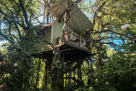 THE BANYAN TREE HOUSE
