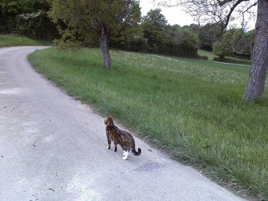 Cette maison appartient à deux chats qui adorent se promener avec nous dansla campagne. Ami des chats bienvenue