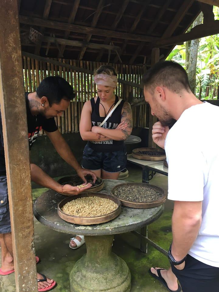 Coffee plantations visit
