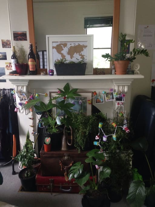 Ferns for that fresh forest feel