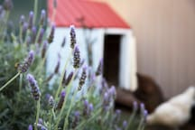 Help yourself to lavender to lay on the bedsides and help you drift off into yummy sleep.