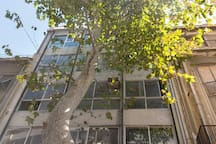 Our building facade with the very large and pleasant plane tree