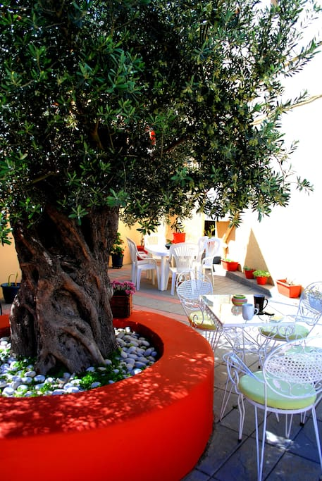 Under the Olive Tree...