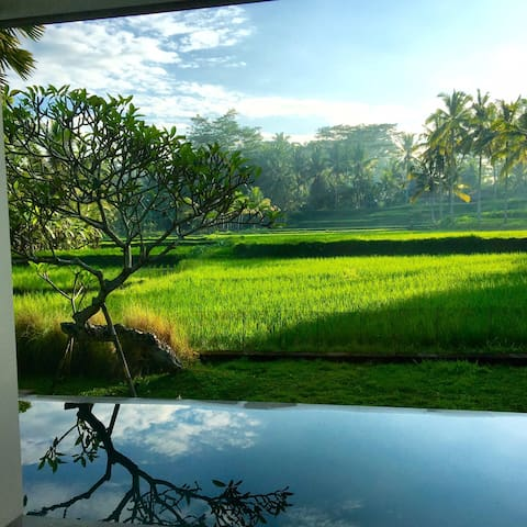 thank you to our guest Mr. Dan for beautiful picture during nyepi (day of silence) holiday in ubud