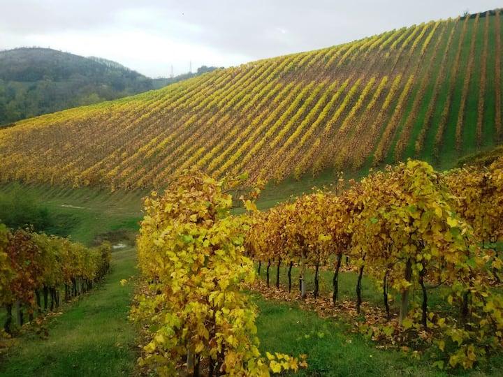 Podere Riosto Wine Guest-Apartament Vecchio Riosto