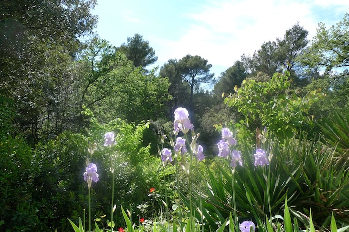 Nature and charm in Aix en Provence