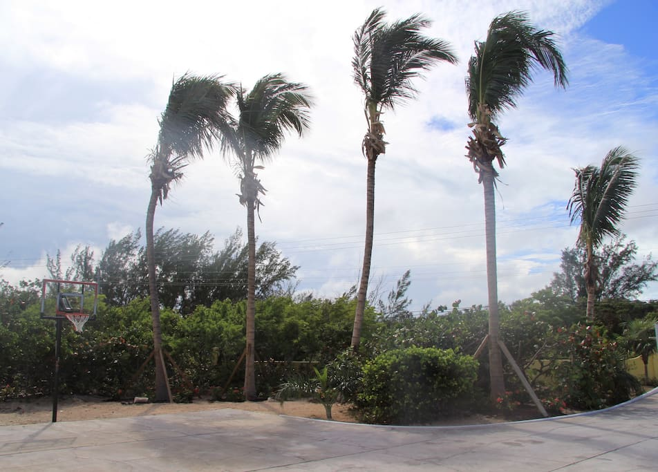 Coconut trees have been a great addition to the amazing landscape.