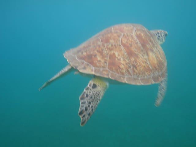 Malendure; la prairie des tortues sous marine